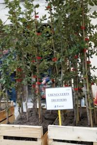 truffle market saplings