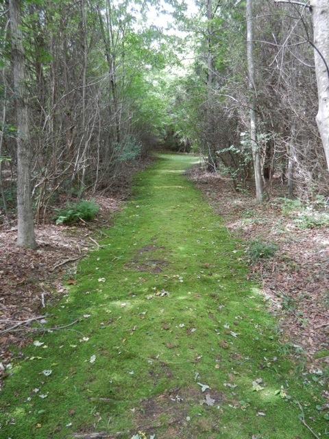 Cranberry moss trail