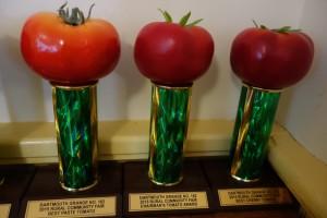 tomato trophies