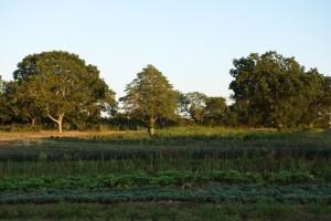 Wainer Farm Dartmouth Mass