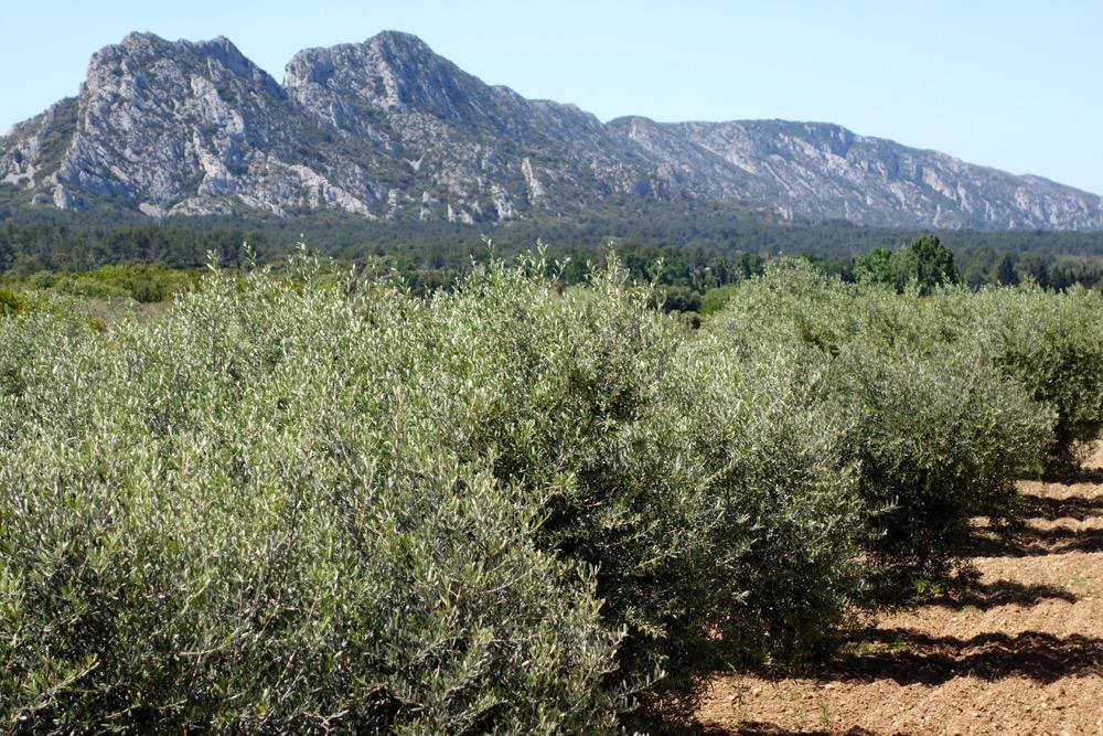 Alpilles Provence