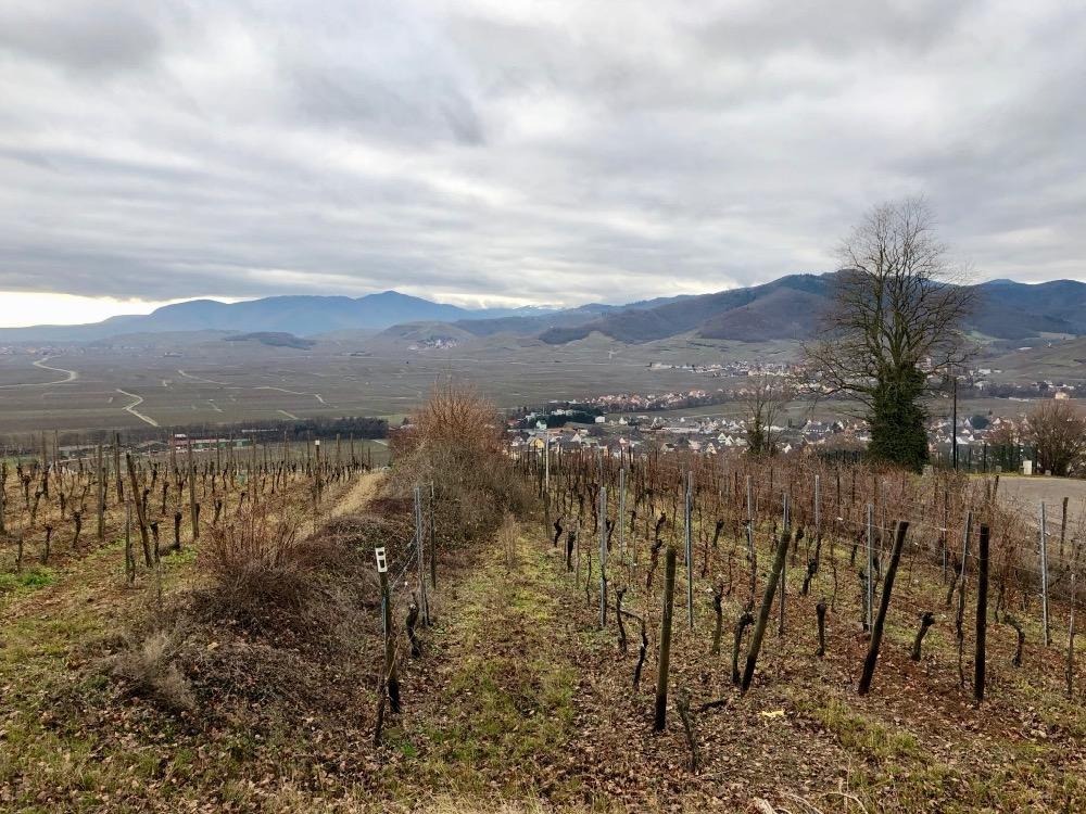 wine route Alsace